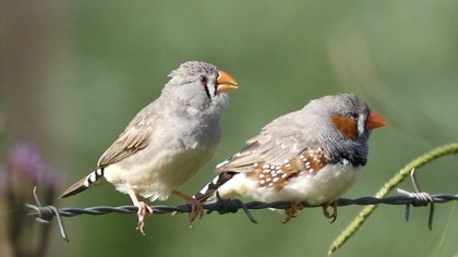 Birds May Actually See Earth's Magnetic Fields Thanks to Proteins in Their Eyes