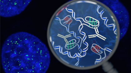 Researchers Discover New DNA Structure Within Human Cells