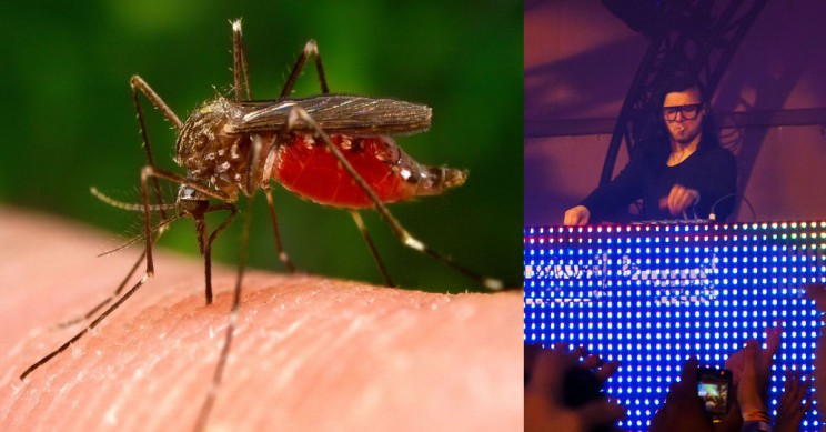 Skrillex's Music Can Stop Mosquitos Biting and Having Sex