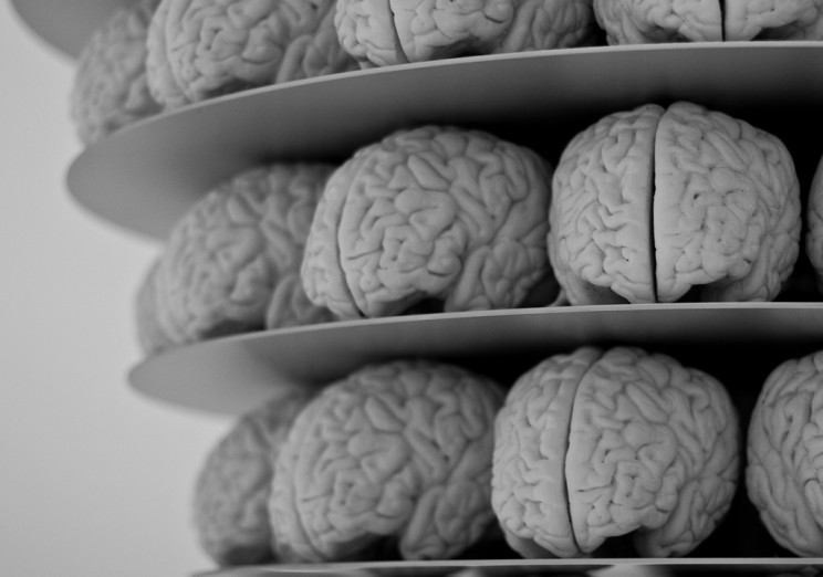 Scientists Uncover More Knowledge About How Our Brain Files Memories