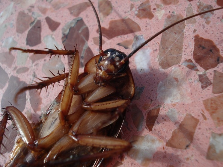 Billions of Cockroaches Bred by AI for Potions Could Cause Catastrophe