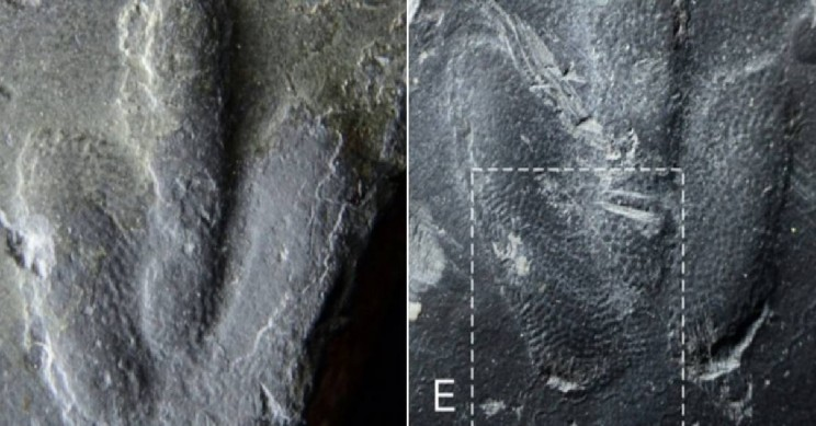 Scientists Discover Perfectly Preserved Dinosaur Footprints with Skin