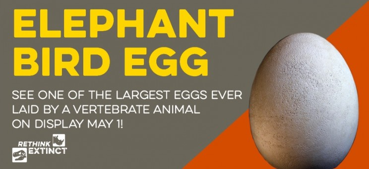 Museum Discovers Rare Elephant Bird Egg Labelled as Replica is Actually Real