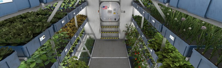 Vegetables Grown in Antarctica Without Soil or Daylight Pave the Way for Mars Mission