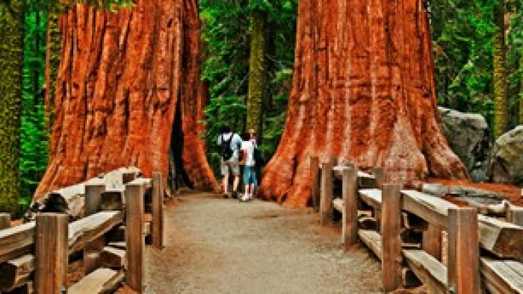 national parks sequoia