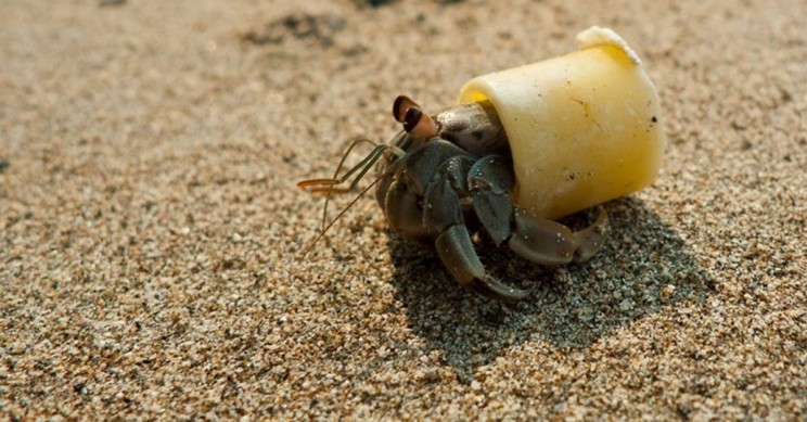 Plastics: Greatest Thing Since Sliced Bread Or a Threat To The Earth?