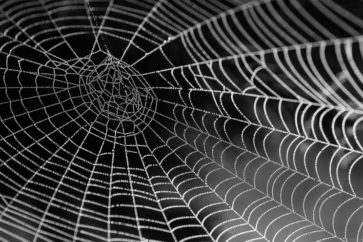 New Research Uses Spider Silk to Heal Bones
