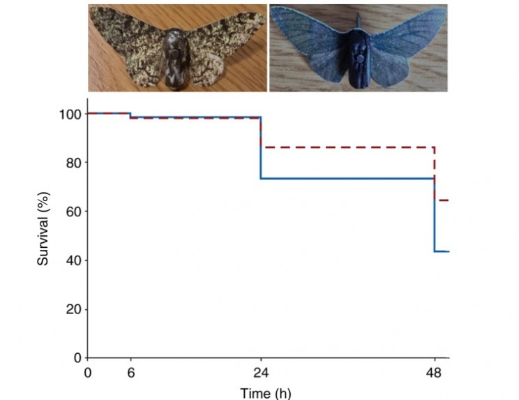 Darwin's Moths survival over time