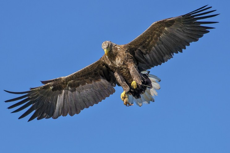 Eagles and Fleas Inspire New Materials with a Tight Grip