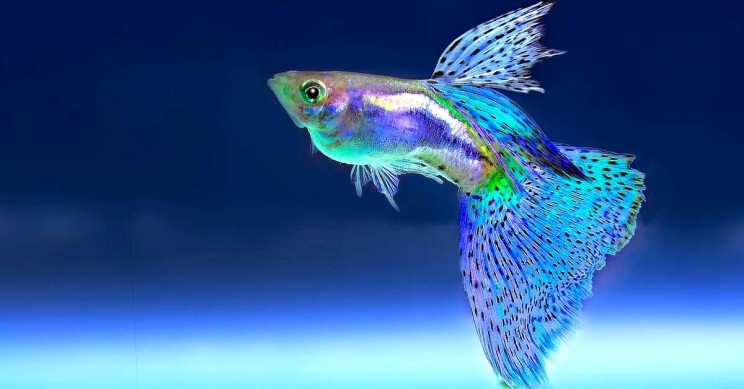 Fish Can Also Count, Says New Study