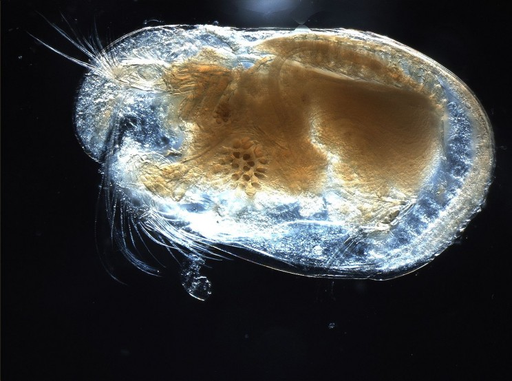 The Origins of Science Words Ostracod