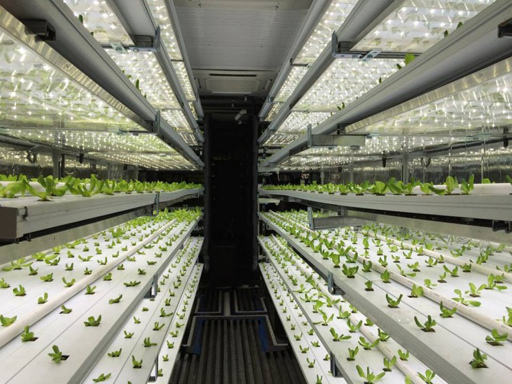 This Farming Company Hopes to Tackle World Hunger With Indoor Agriculture