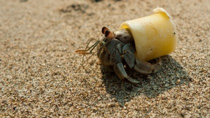 What Do We Do About Plastics?