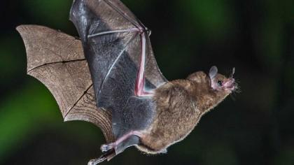 Can Bats Live Forever? A New Study Reveals the Secret behind Bats' Longevity