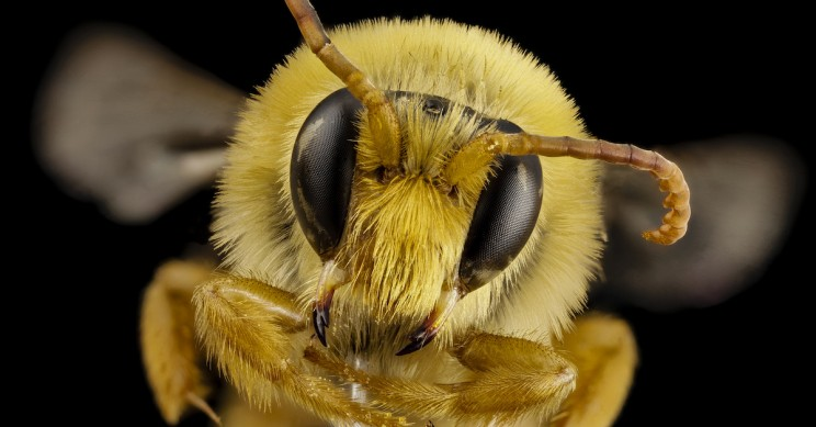 Bees Complete Counting Tasks Using Just Four Nerve Cells