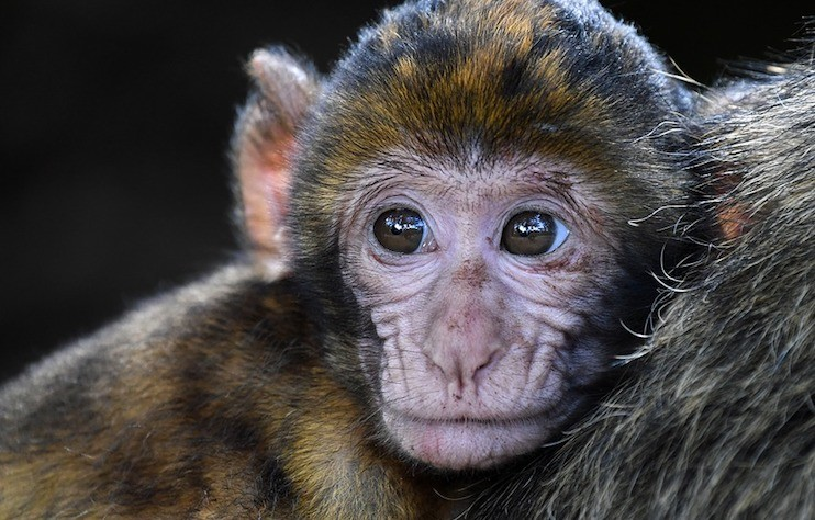 Scientists 'Inject' Information into Brains of Monkeys Using Electrical Currents