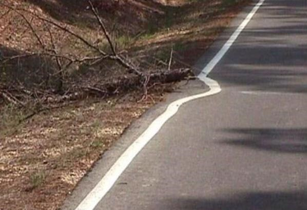 "The 15 Best ""Not My Job!"" Images on the Internet"