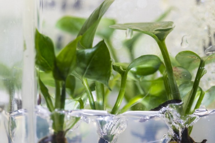 Genetically Modified House Plant Can Remove Polluted Air