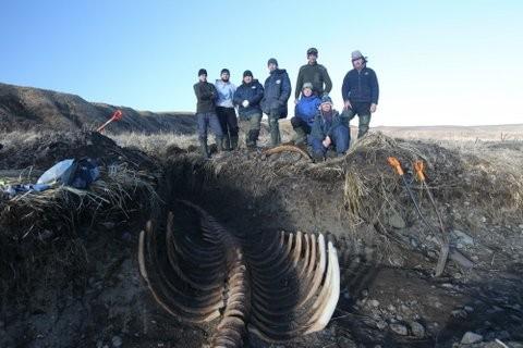 Massive Skeleton of Extinct Sea Cow Found on a Remote Beach in Siberia