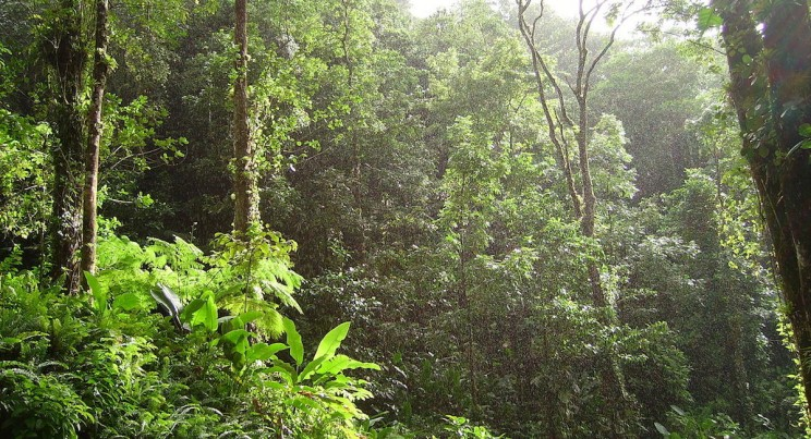 Secret to Tropical Forest Diversity Lies in Seed Killing Fungi