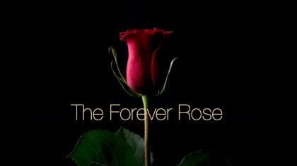 "Crypto-Artwork ""The Forever Rose"" Sells for $1 Million on Valentine's Day"