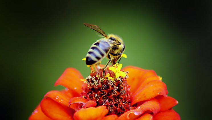 Can Honeybees Learn Math? Research Suggests They Can
