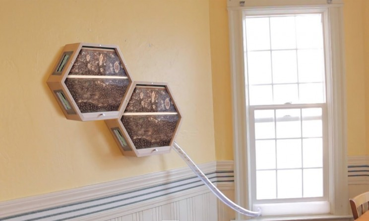 Company Creates Beehives you can Mount on your Wall