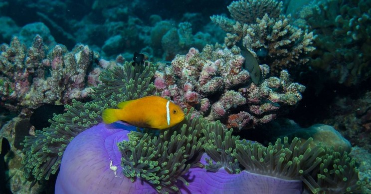 Novel 3D Method to Boost Coral Growth in Great Barrier Reef