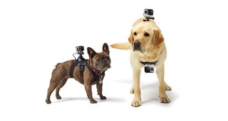 gadgets for pets Go Pro