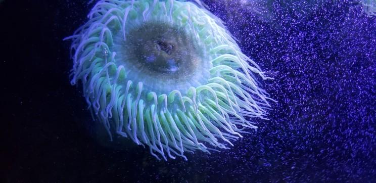 Deep Sea Marine Life