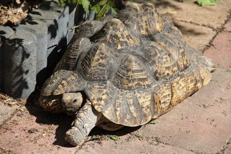 Radical Insulin Delivery Pill Inspired by Tortoise Shell