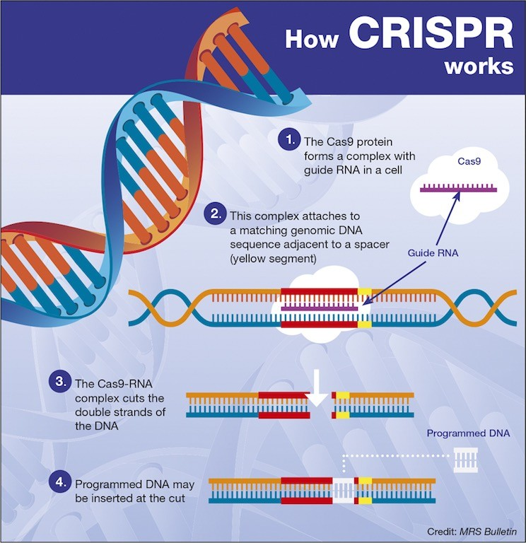 Gene-Editing Tool CRISPR Could Help Doctors Kill Cancer Cells
