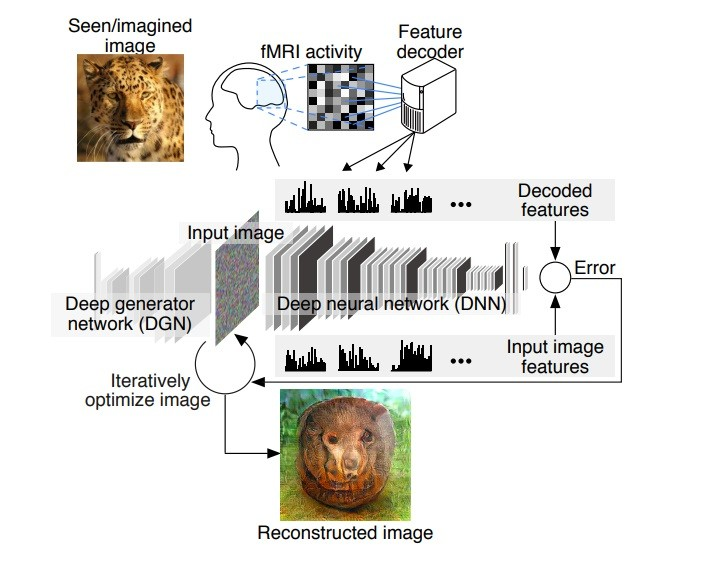 Researchers Develop Neural Network with Remarkable Mind-Reading Capabilities
