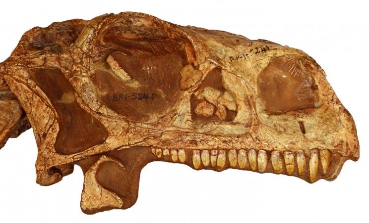 You Can Use a 3D Surface File to Print a 200-Million-Year-Old Dinosaur Skull at Home