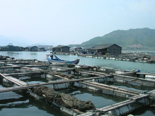 These Massive Floating Fish Farms in China Provide Most of the World's Seafood
