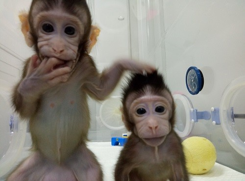 Scientists Clone Monkeys for the First Time, Getting Closer to Cloning Human Beings