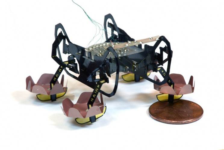 This Cockroach-Inspired Microbot Can Swim, Sink and Walk Underwater
