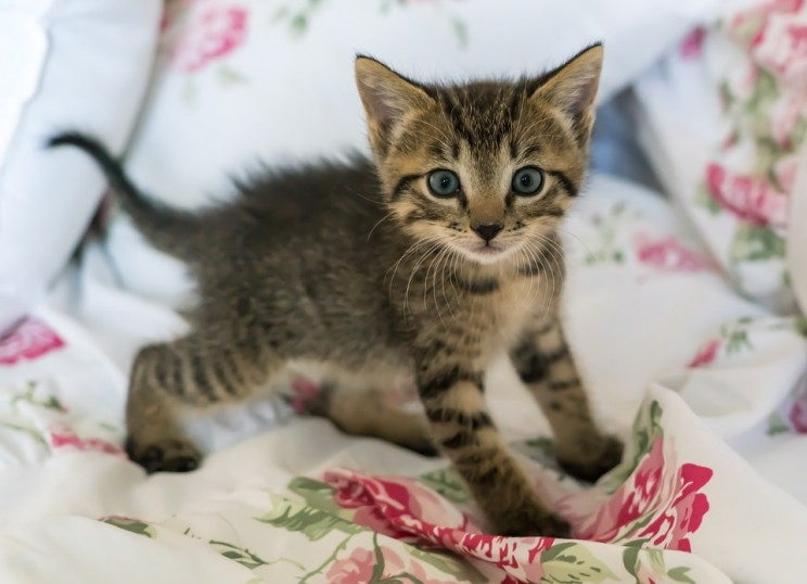 Schrödinger kitten