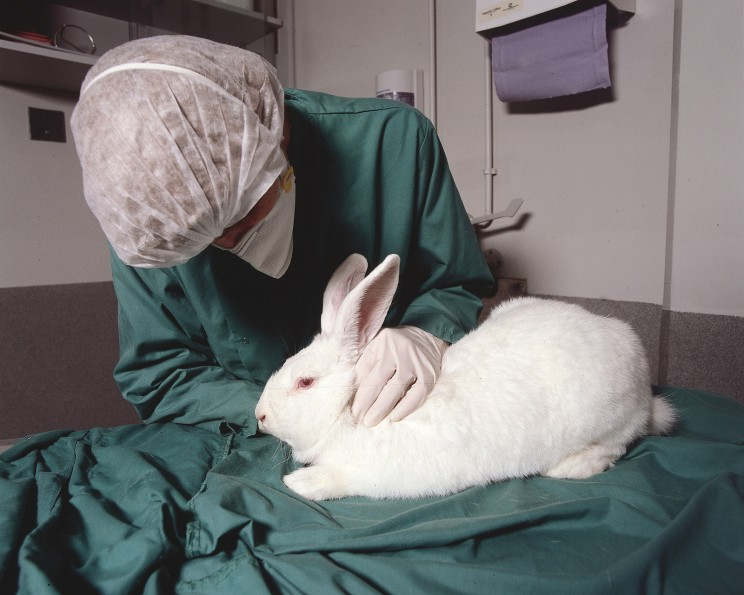 Is It Time to End Animal Testing?: How Technology Can Replace Animals