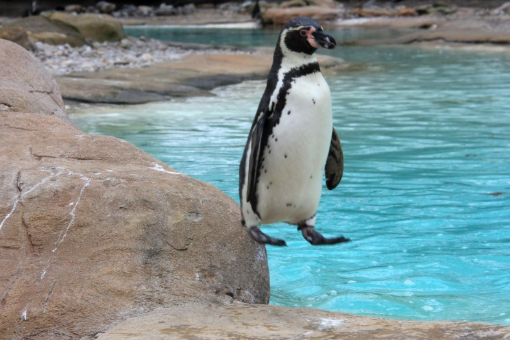 Funny photo of weird penguin