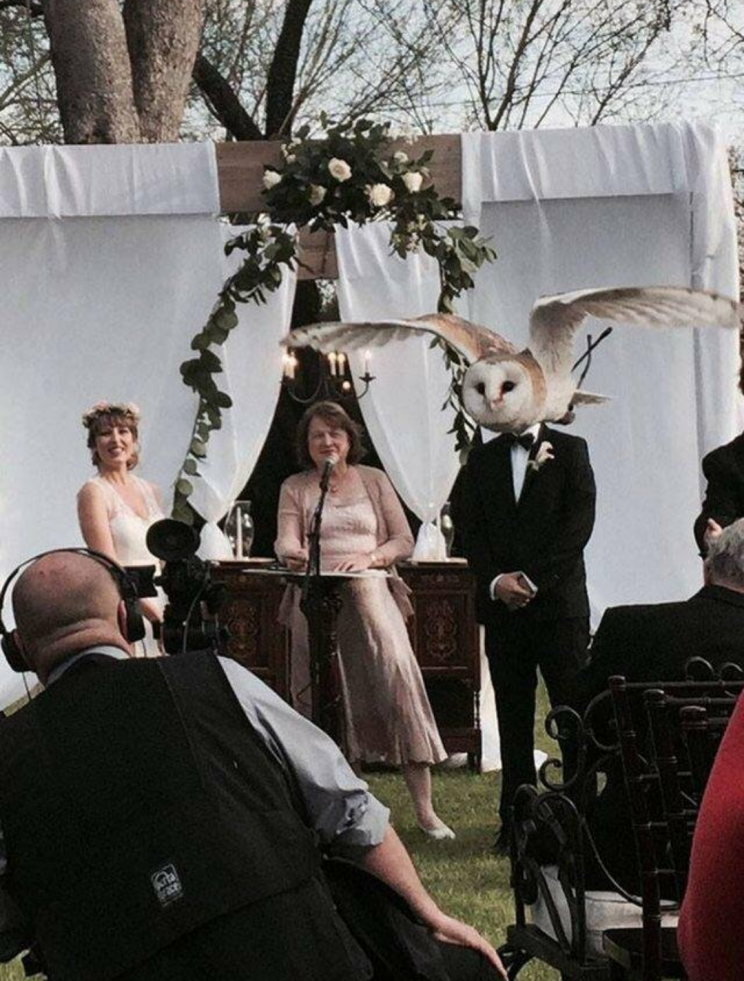 Perfectly timed wedding photo of photoboming owl