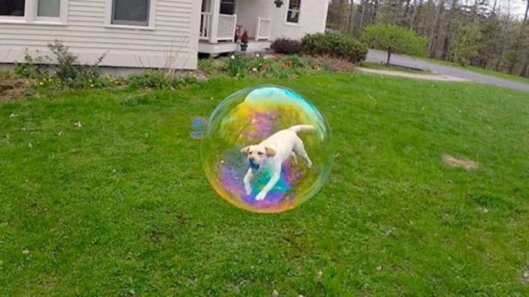 Funny well timed photo of a dog in a bubble