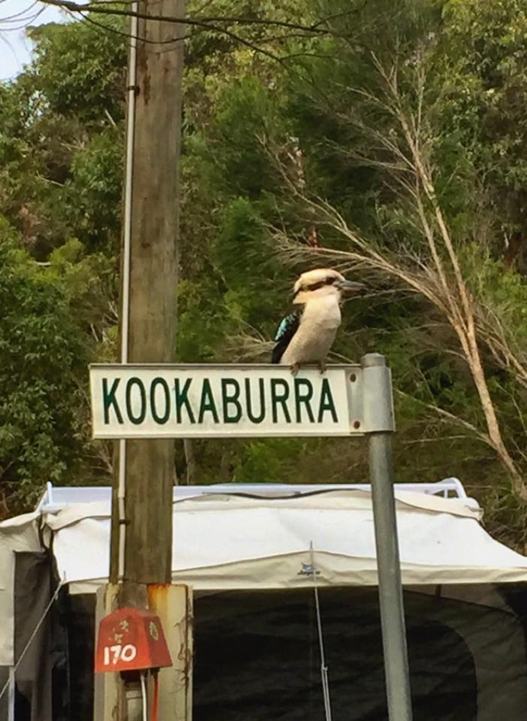 Funny picture of kookaburra on a sign