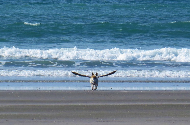 Perfectly timed photo of dog with wings