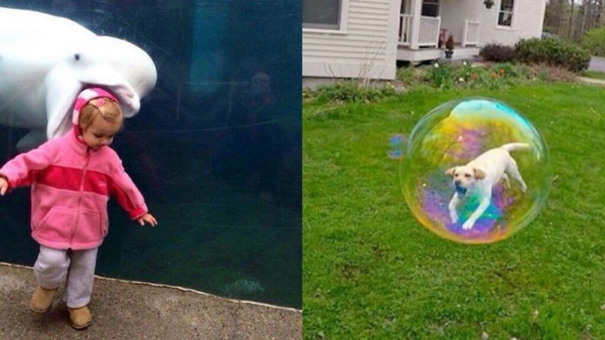 perfectly timed photos md - 30+ funny timed photos