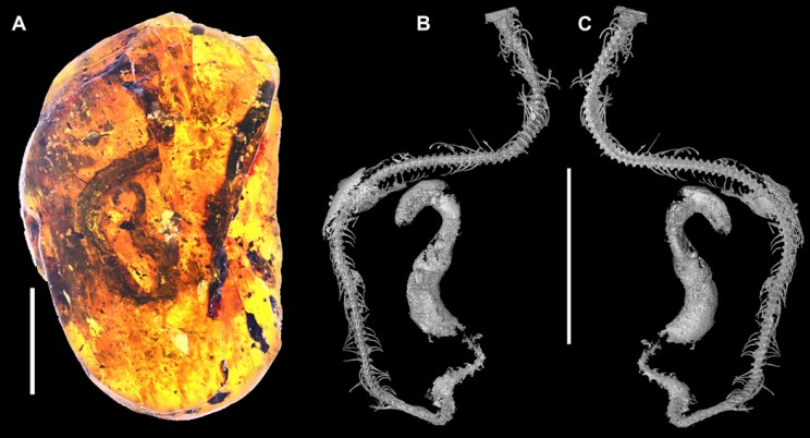 World's First Known Ancient Baby Snake Fossil Discovered Preserved in Amber