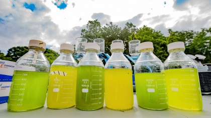 Scientists Confirm that Biodiversity is Key to Growing Stable Algal Biofuel