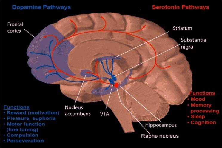 11 Interesting Discoveries of the Brain Over the Past Ten Years