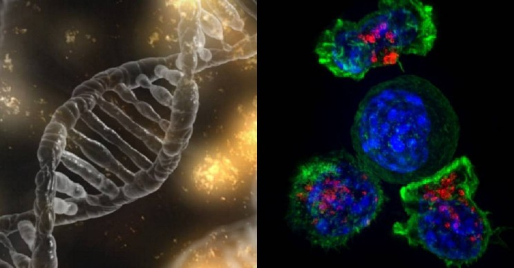 11 Developments and Discoveries in Human Biology and