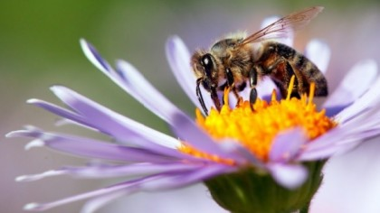 Honey Bees Grasp the Concept of Zero Finds Study